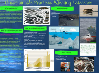 Unsustainable Practices Affecting Cetaceans