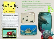 Sea Turtles's thumbnail