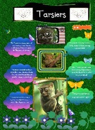 Stage Three Rainforest Project's thumbnail