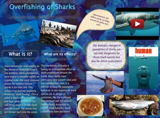 Overfishing of Sharks