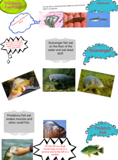 Interesting Fish Facts