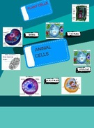 PLANT CELLS & ANIMAL CELLS's thumbnail