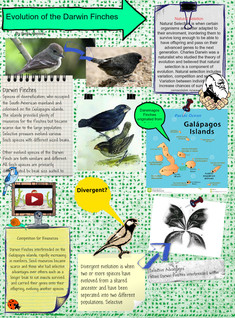 Evolution of the Darwin Finches