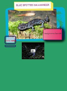 Example: Spotted Salamander Glog