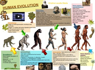 Human evolution- Cristina Lacalle