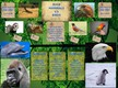 Mammals vs Birds thumbnail