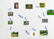 food web science's thumbnail