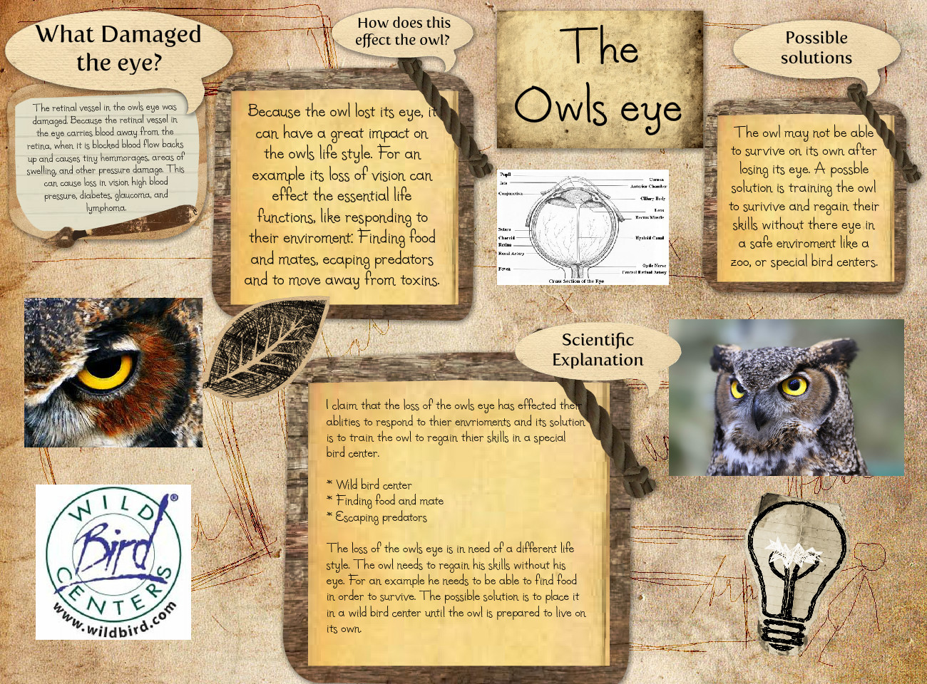 The Owls Eye
