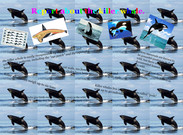 Killer-Whale Report....'s thumbnail