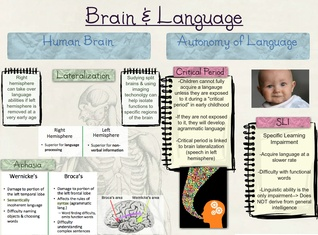 Brain & Language