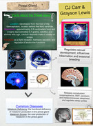 Pineal Gland's thumbnail