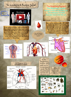 The Circulatory & Respitory System