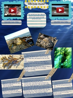 Sea World - Intertidal zone