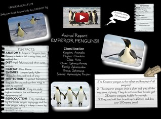 Animal Report: Emperor Penguins