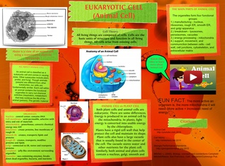 Eukaryotic cell (Animal Cell)