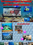 Sea Plastic Population's thumbnail