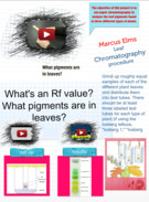 The Effects of Chromatography on Leaf Pigments's thumbnail