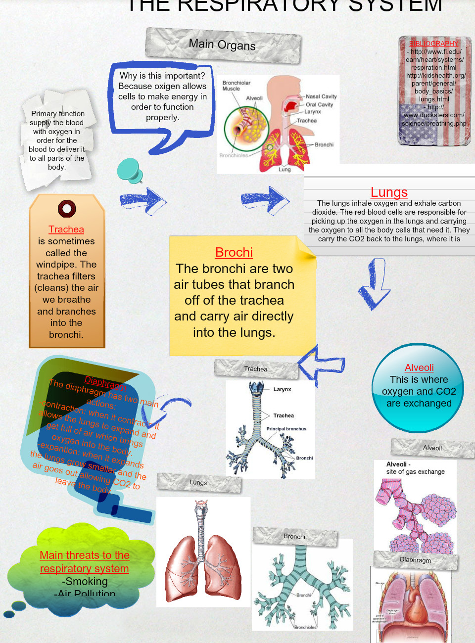 5th Grade - The Respiratory System