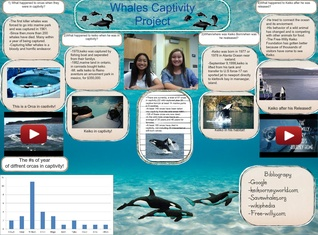Whales Captivity project