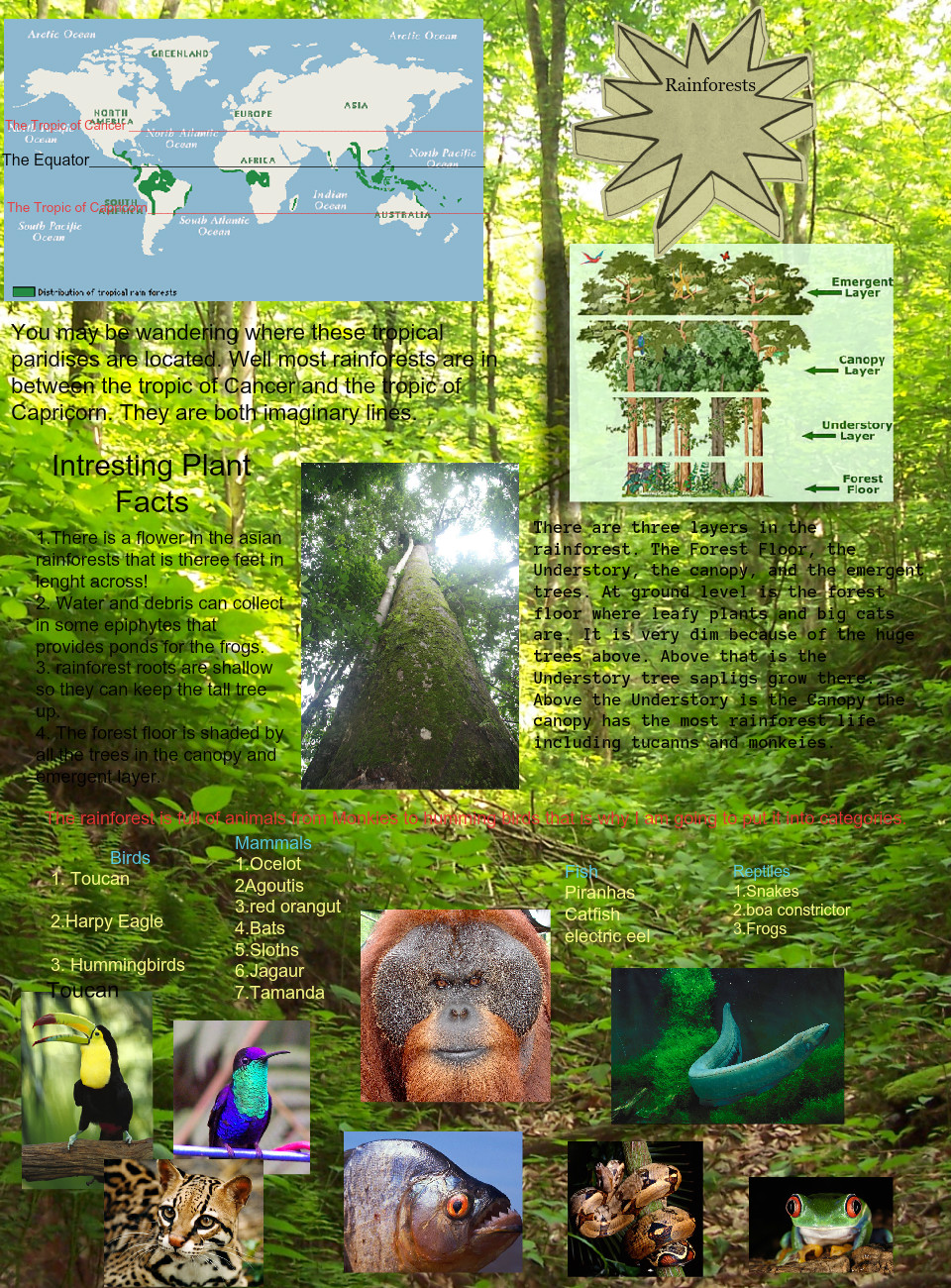 Cayde's rainforest brochure