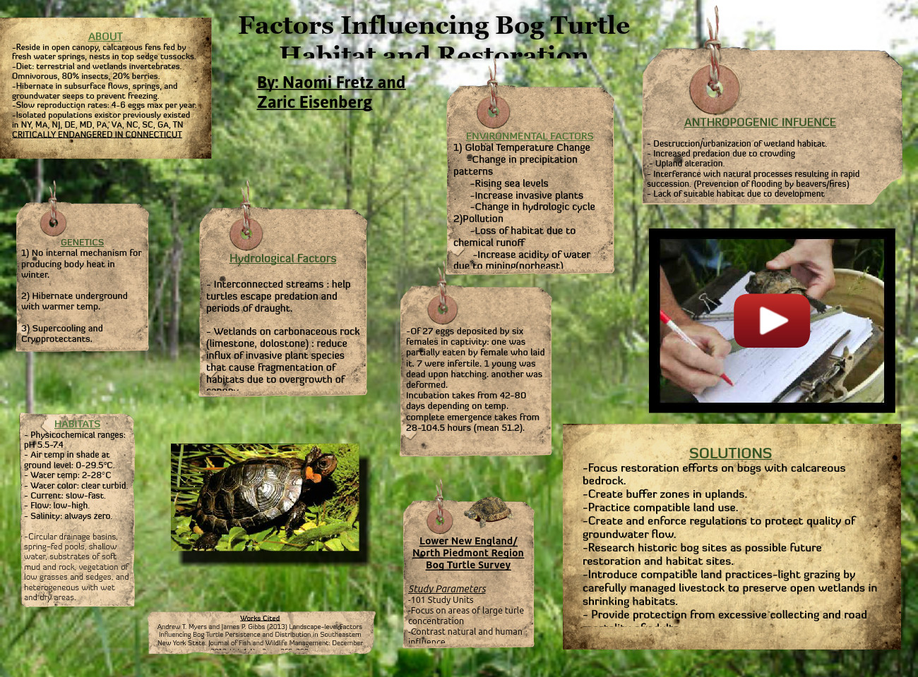 Factors Influencing Bog Turtle